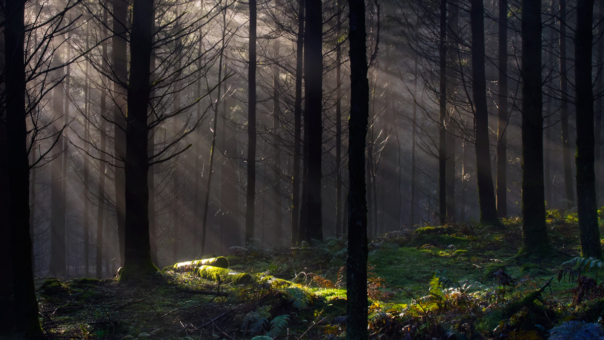 Photograph Forest light, Dunkeld.. by David Mould on 500px
