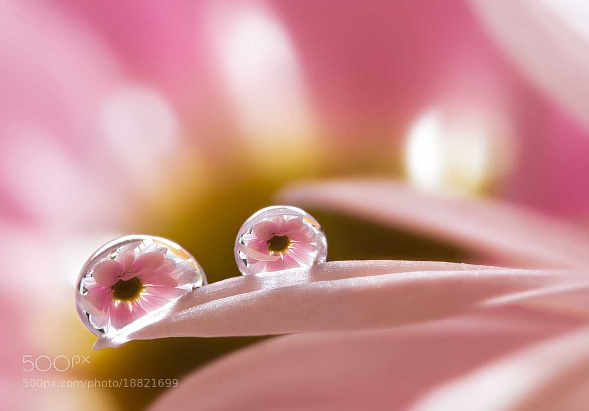 Photograph Sweet Water by Miki Asai on 500px