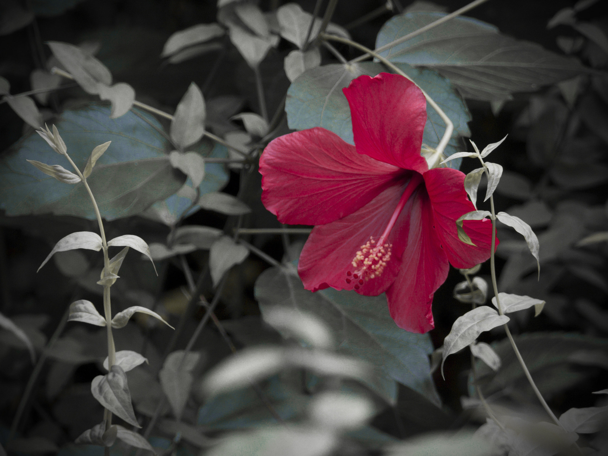 Photograph HIBISCUS  by the frie on 500px