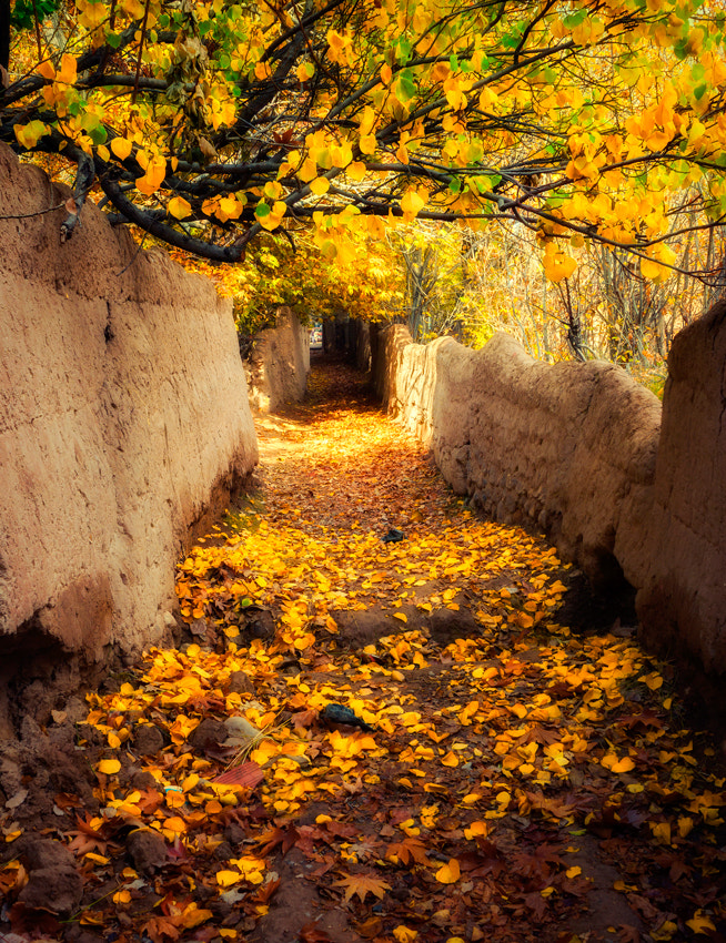 Photograph Leaves of Gold II by Farshad Davari on 500px