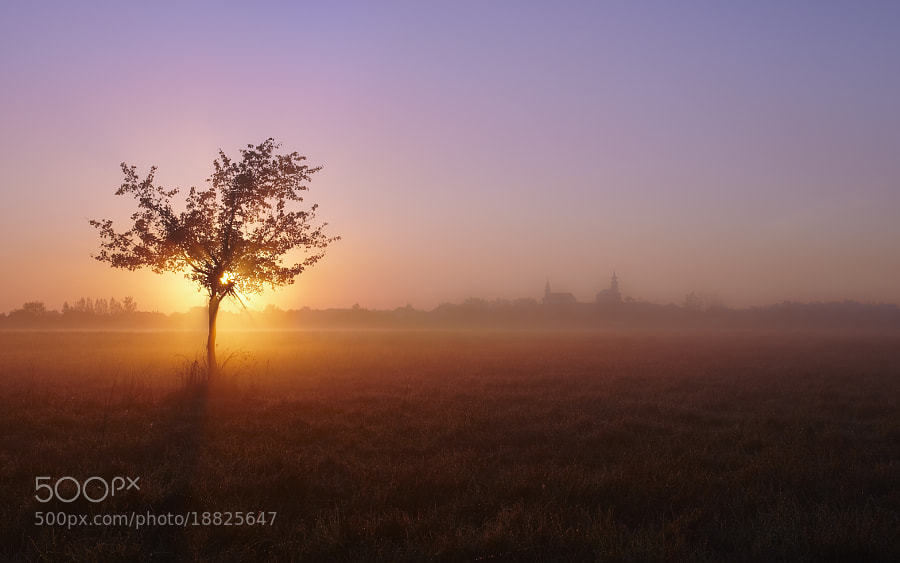 Photograph Morning Fog by btpusz * on 500px
