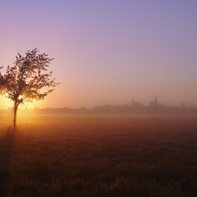 Morning Fog by btpusz * (btpusz)) on 500px.com