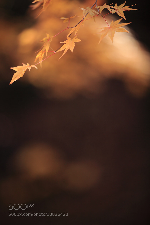 Photograph autumncollar by makoto isa on 500px