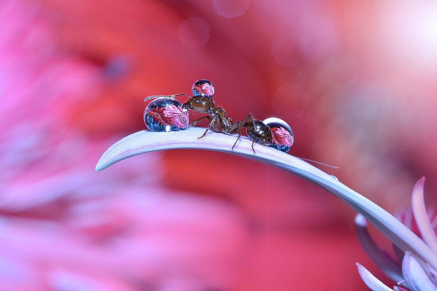 macro-photography - This is My Flower... by Juliana Nan on 500px.com