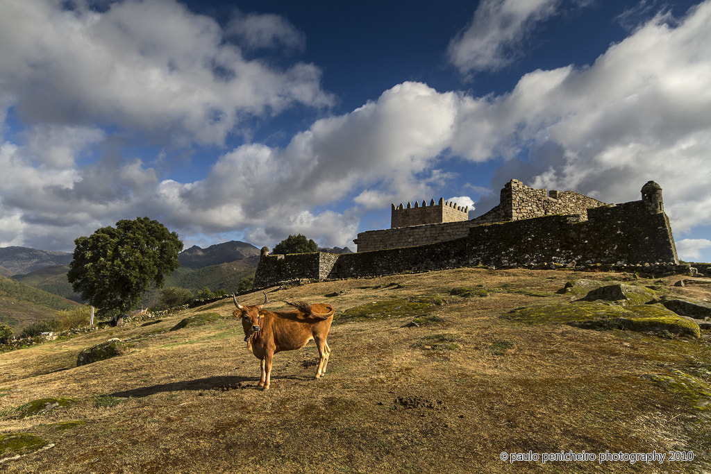 Photograph The Guardian by Paulo Penicheiro on 500px