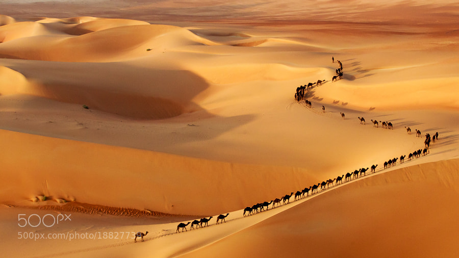 Photograph Camel train by Josh Owens on 500px
