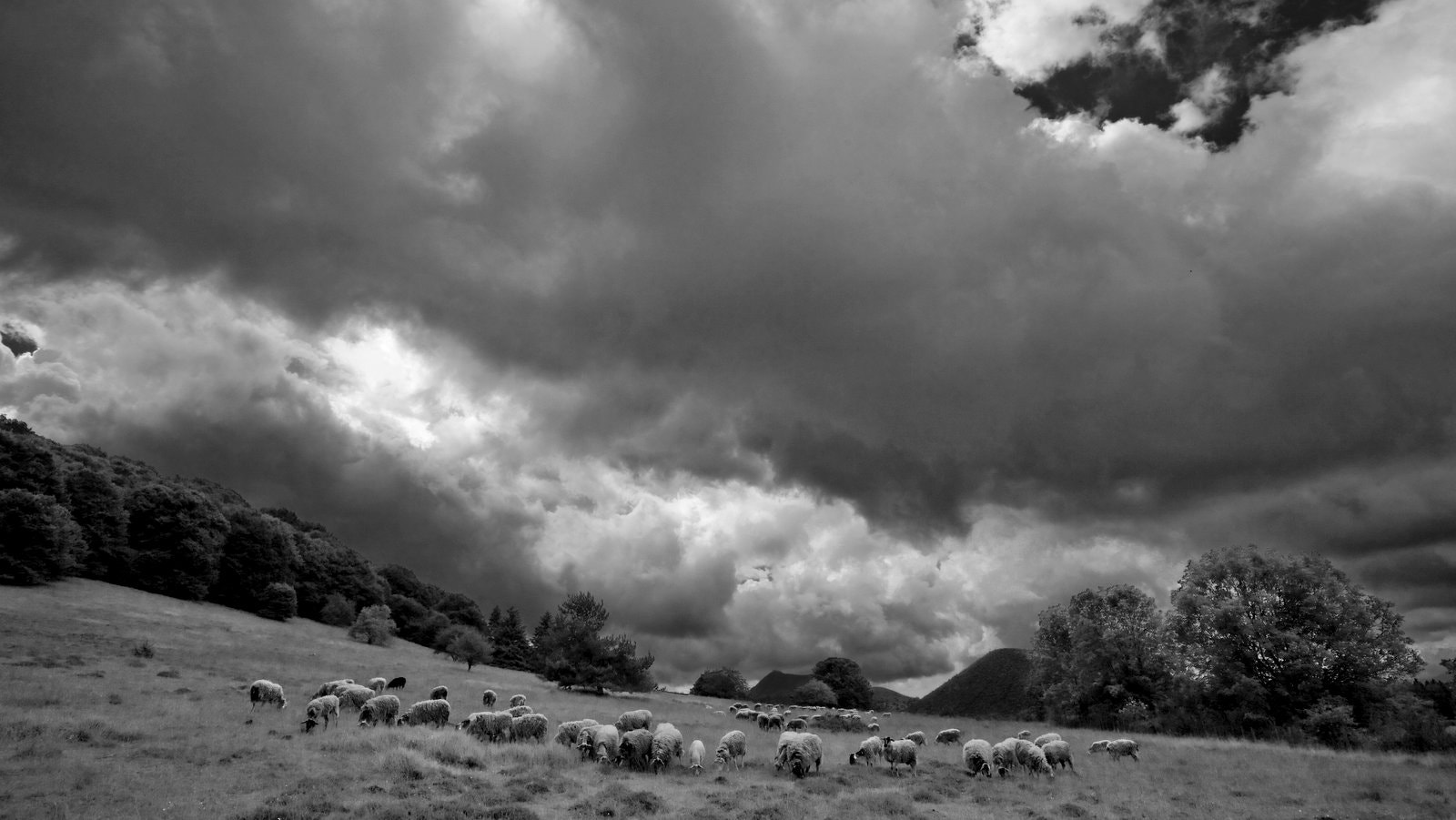Photograph Sheeps on volcan side, Auvergne, France by josselin breugnot on 500px