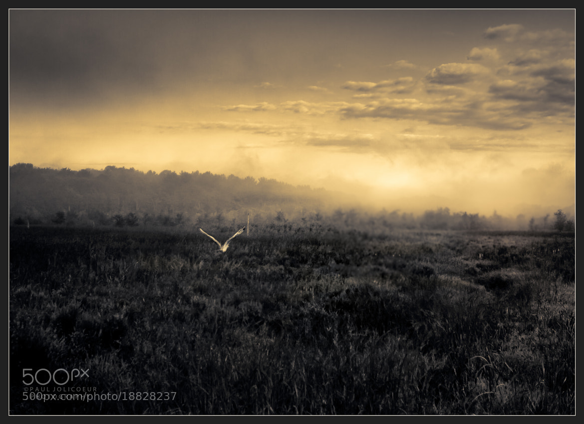 Photograph Toward the Mist by Paul Jolicoeur on 500px
