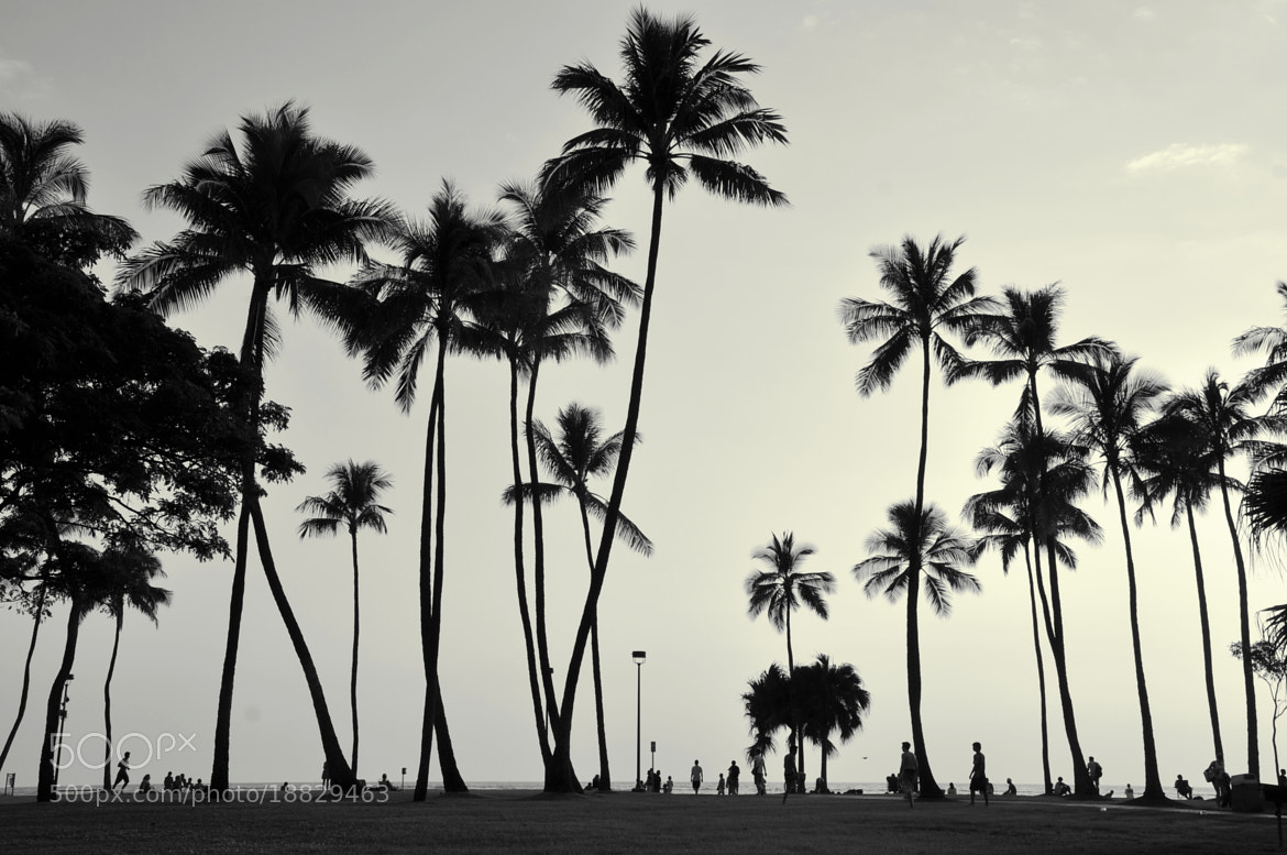 Photograph Palm Trees Black and White by Olga Osipova on 500px