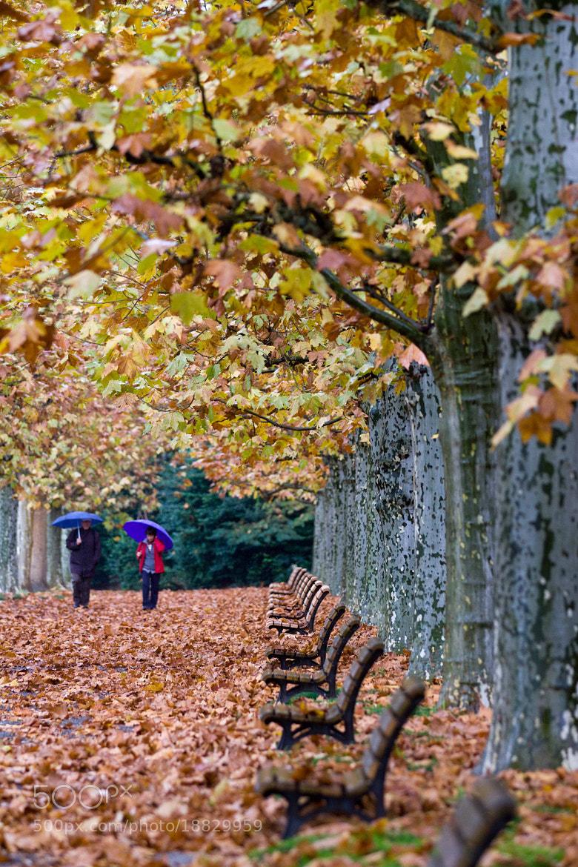 Photograph Les feuilles sèches, Japon Shinjuku pluie.  by Hiroaki Kawashita on 500px