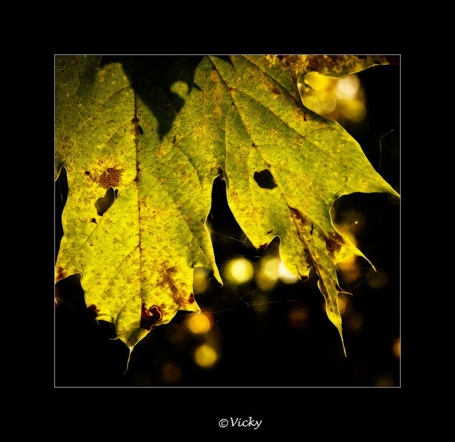 Photograph autumn leaves by Vicky Dens on 500px