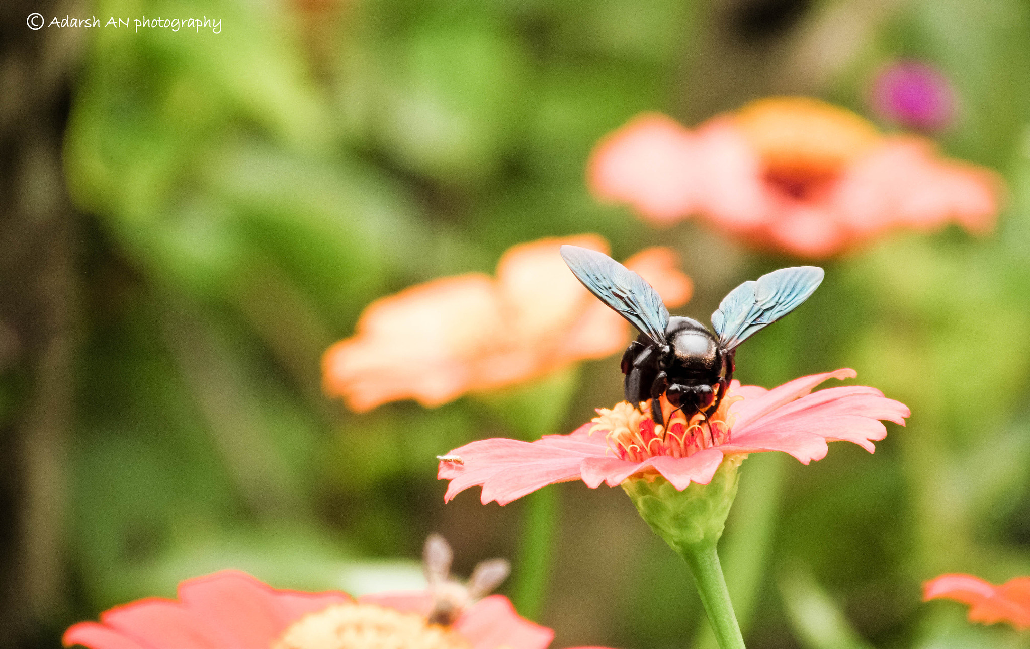 Photograph Beetle by Adarsh An on 500px