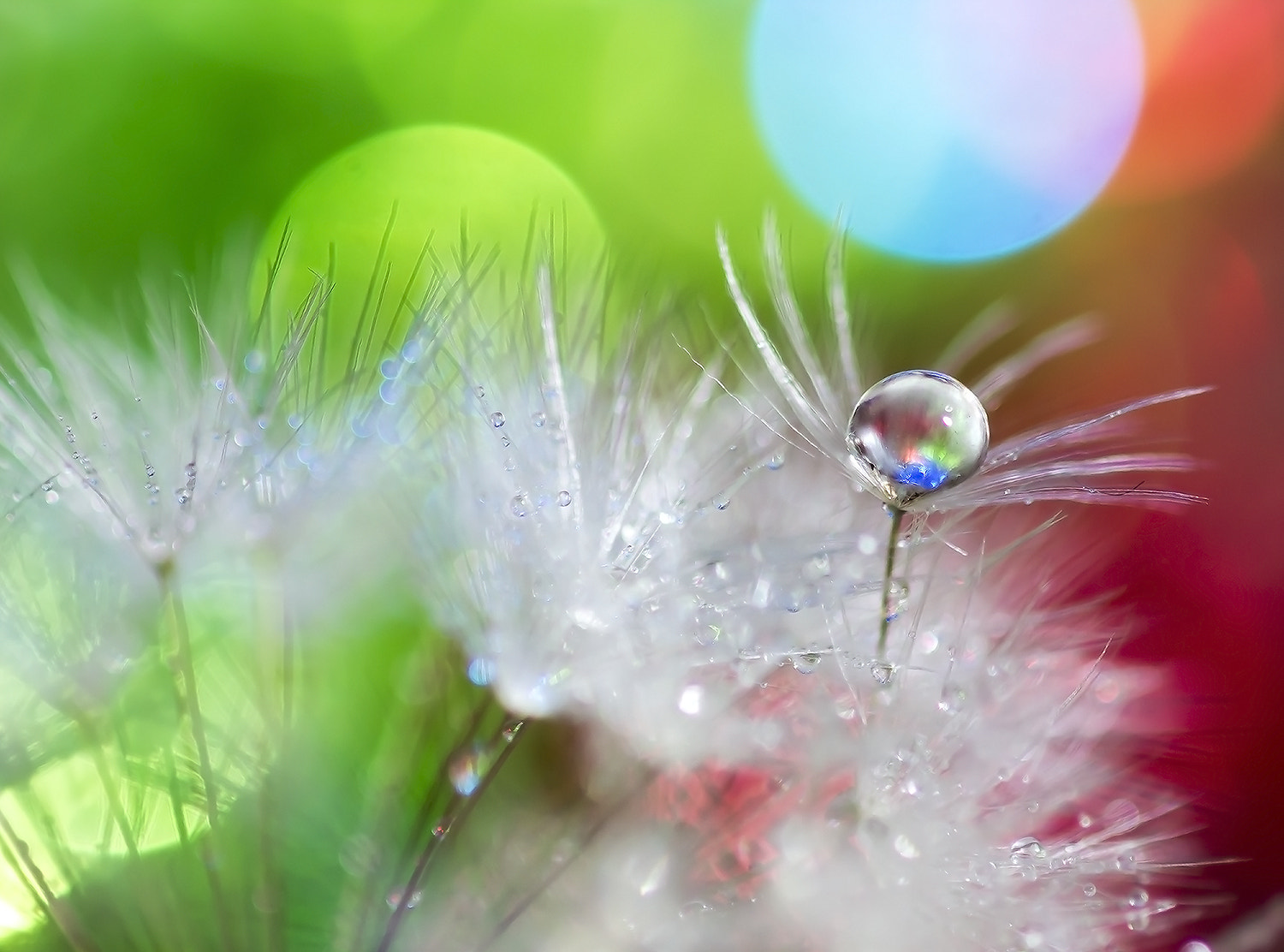 "Photograph """"""Drop Fancy """""" by OKAWA โอ๋กะหว้า. somchai on 500px"