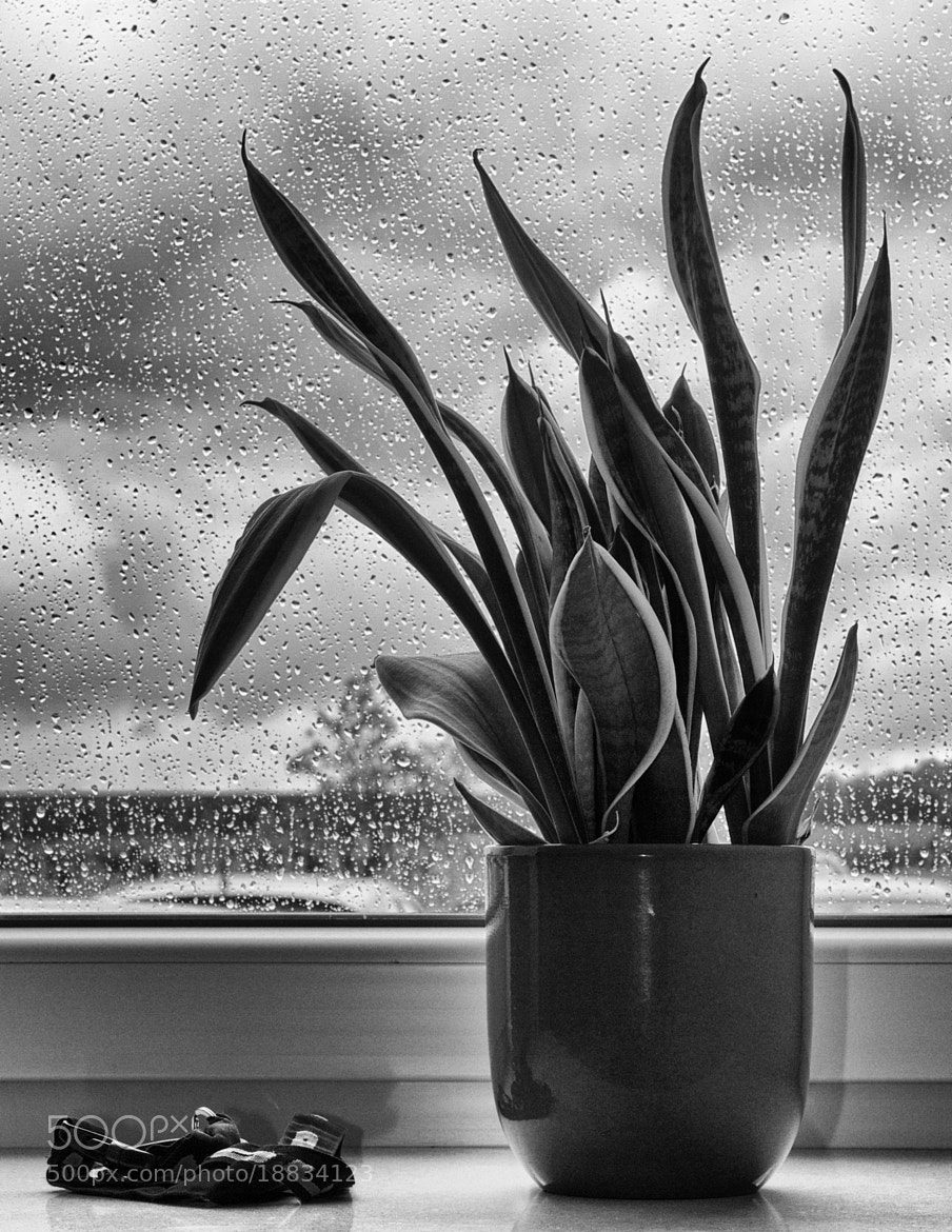 Photograph Plant protected against rain by Jan Kampling on 500px