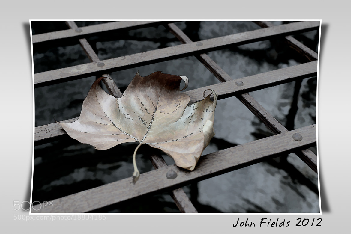 Photograph A cambered leaf o by John Fields on 500px