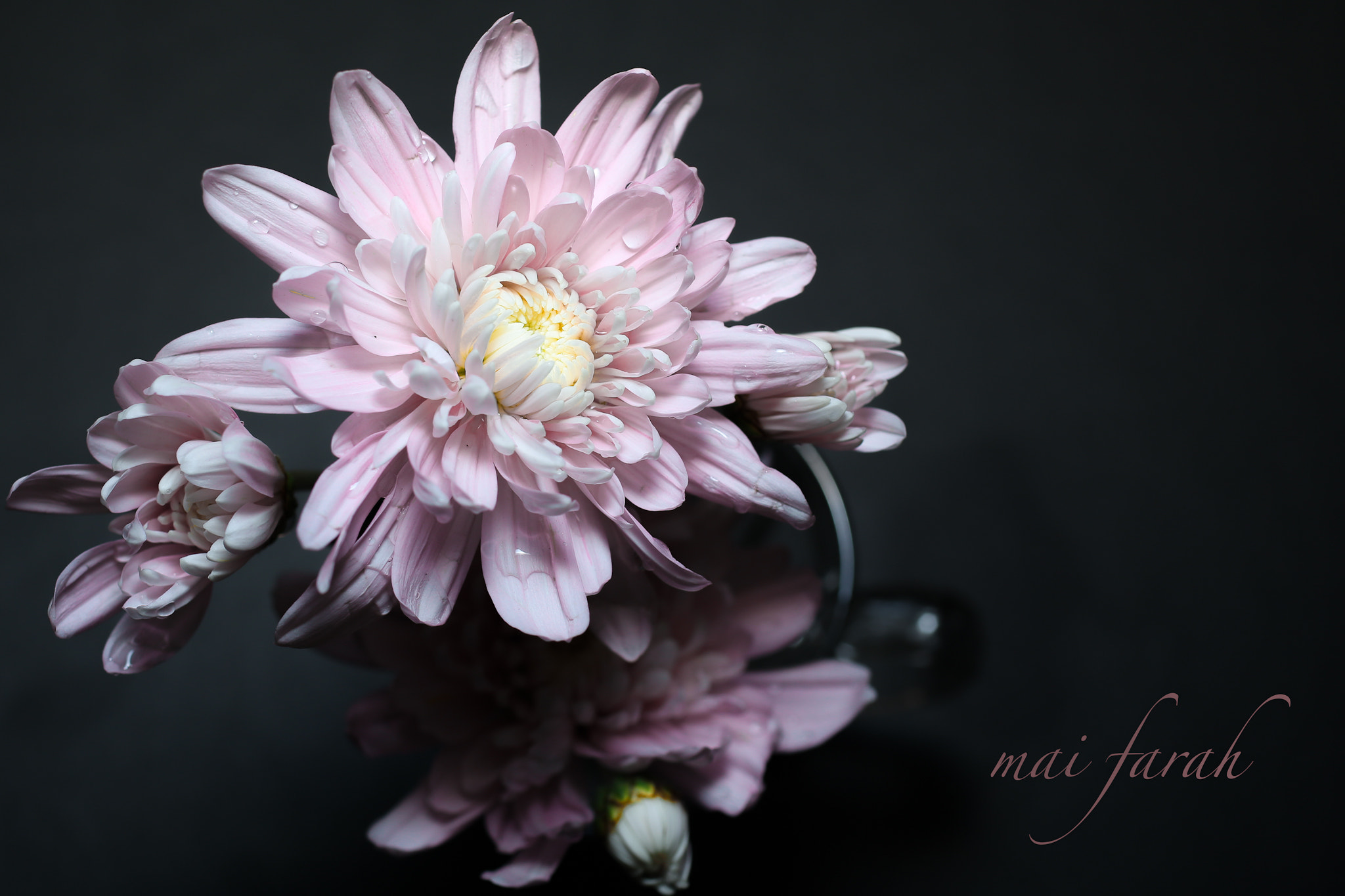 Photograph flower by Maifarah CZ on 500px