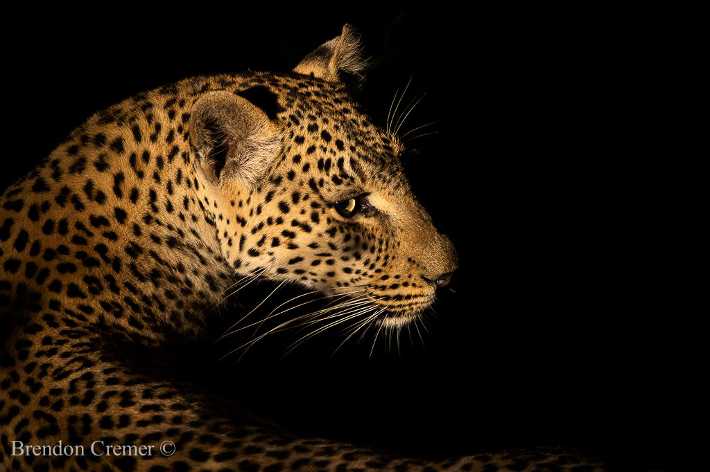 Photograph Night Queen by Brendon Cremer on 500px
