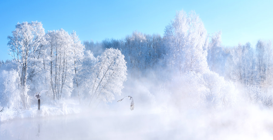 Beautiful Winter by Margaret Morgan on 500px.com