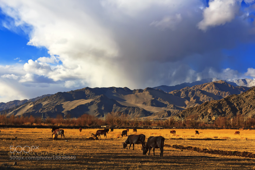Photograph AUTUMN PASTURES by KALPANA  CHATTERJEE on 500px