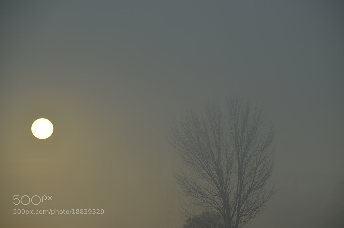 Photograph November Sun by Atomic Triptych on 500px