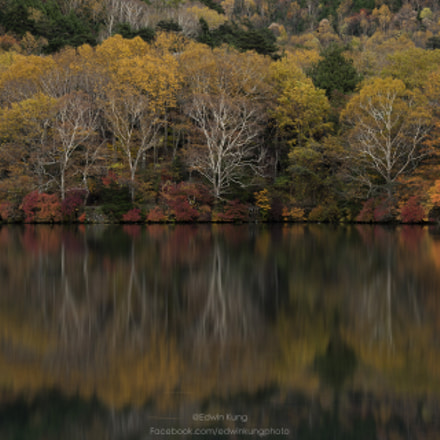 Silence Autumn