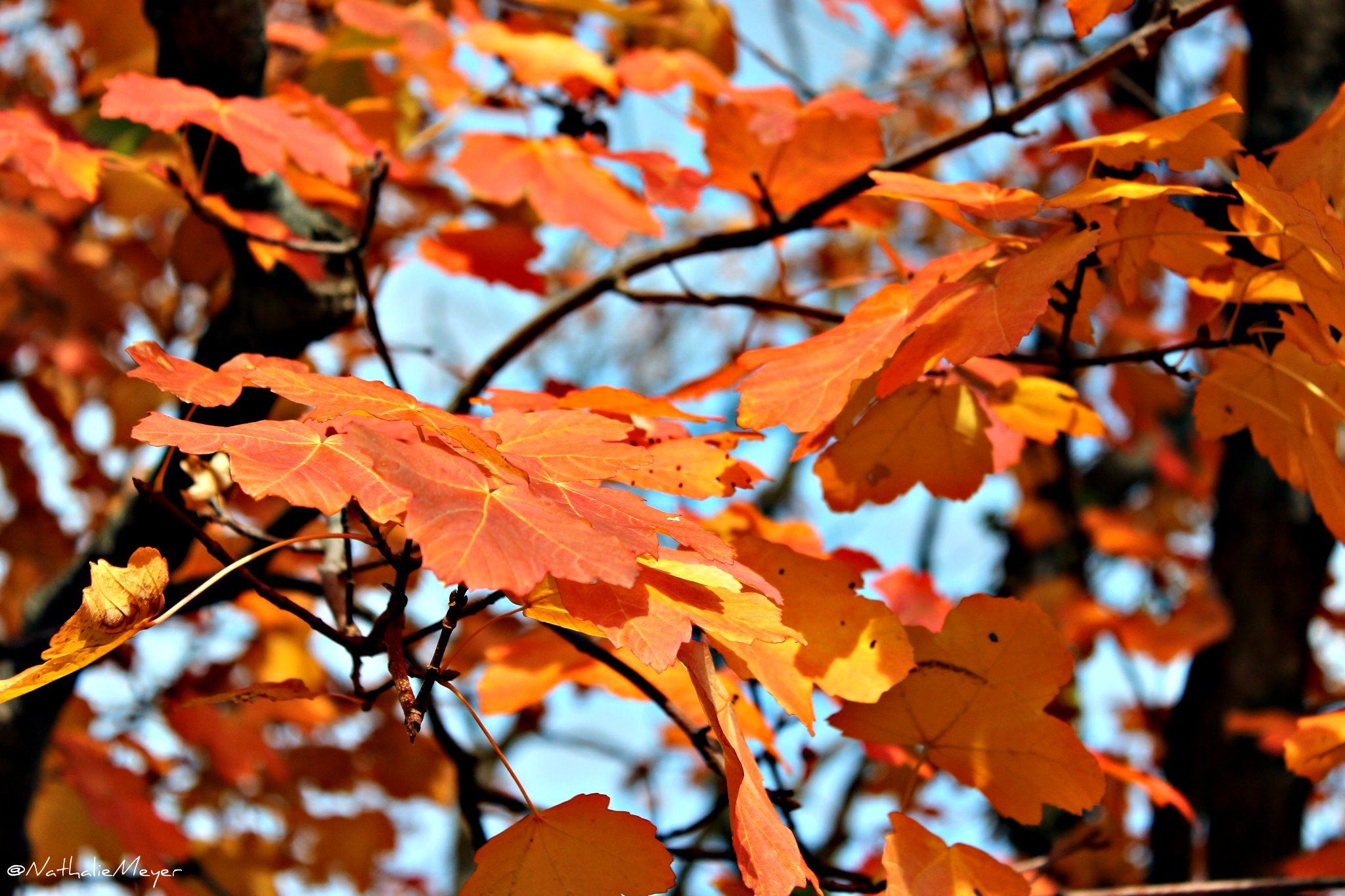 Photograph Autumn leaves by Nathalie Meyer on 500px
