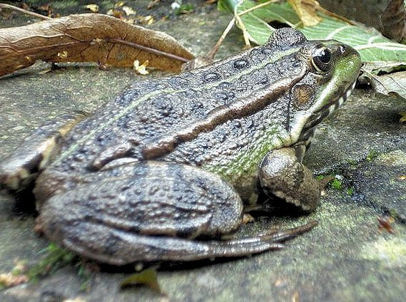 Photograph Toad by Heather Aplin on 500px