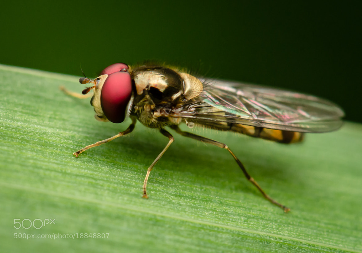 Photograph The Fly by Ben Robson Hull on 500px