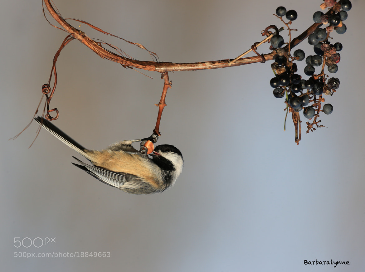 Photograph Hanging around by Barb D'Arpino on 500px