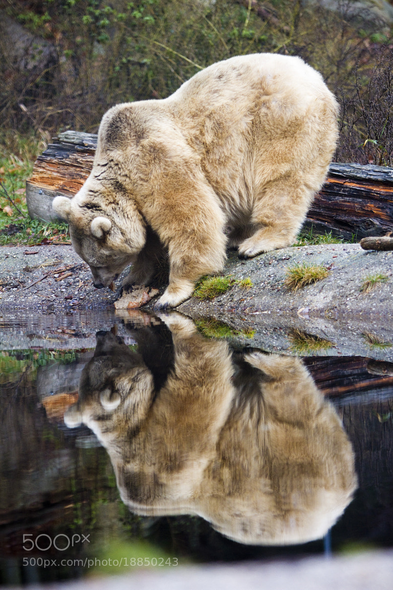 Photograph double bear by Patrick Weinhofer on 500px