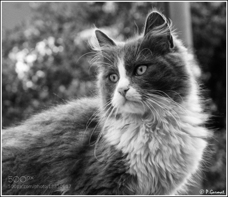 Photograph CatBoy  by Garmatis Pantelis on 500px