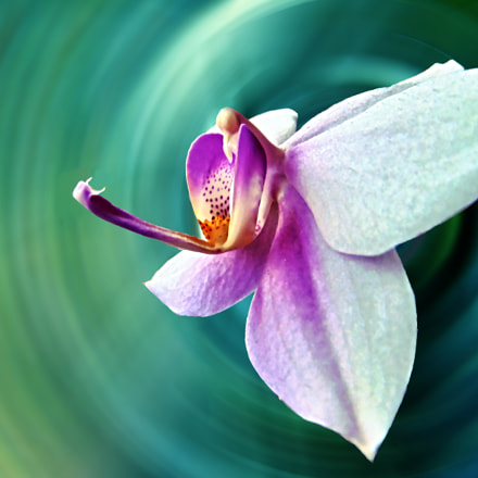 The magic orchid