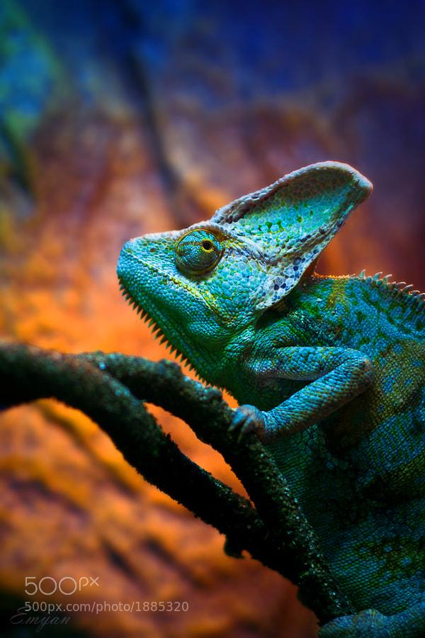 Blue chameleon on a tree