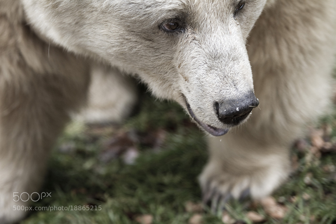Photograph yeah right, i look like a bear by Patrick Weinhofer on 500px