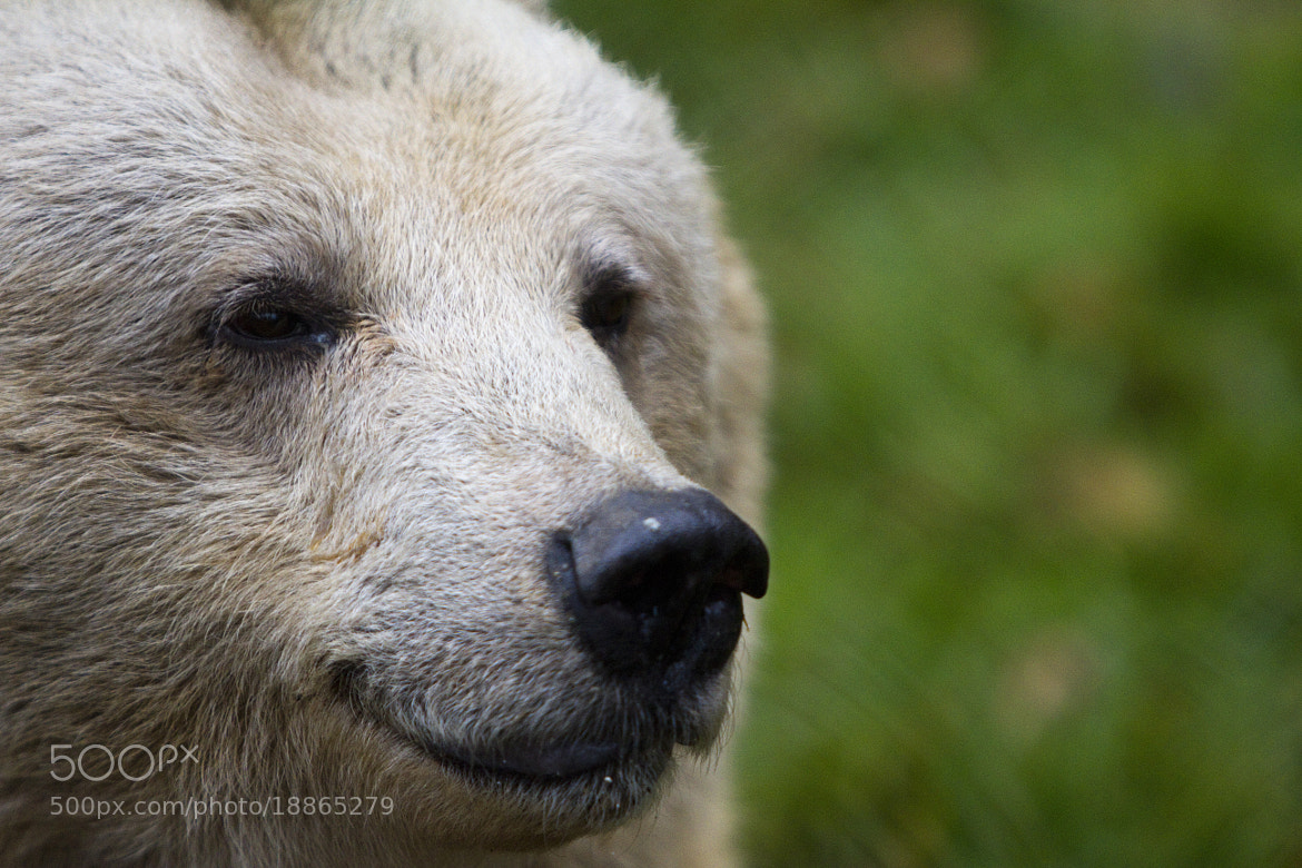 Photograph My name is bear by Patrick Weinhofer on 500px