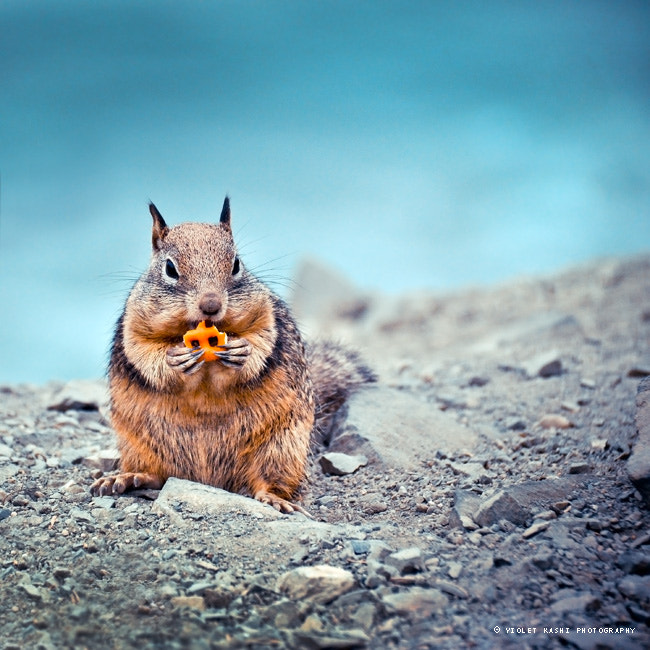 Photograph Afternoon Snack by Violet  Kashi on 500px