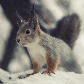 Squirrel again ) by Sergey Makarov on 500px.com