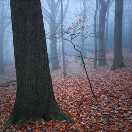 Vestiges of Autumn