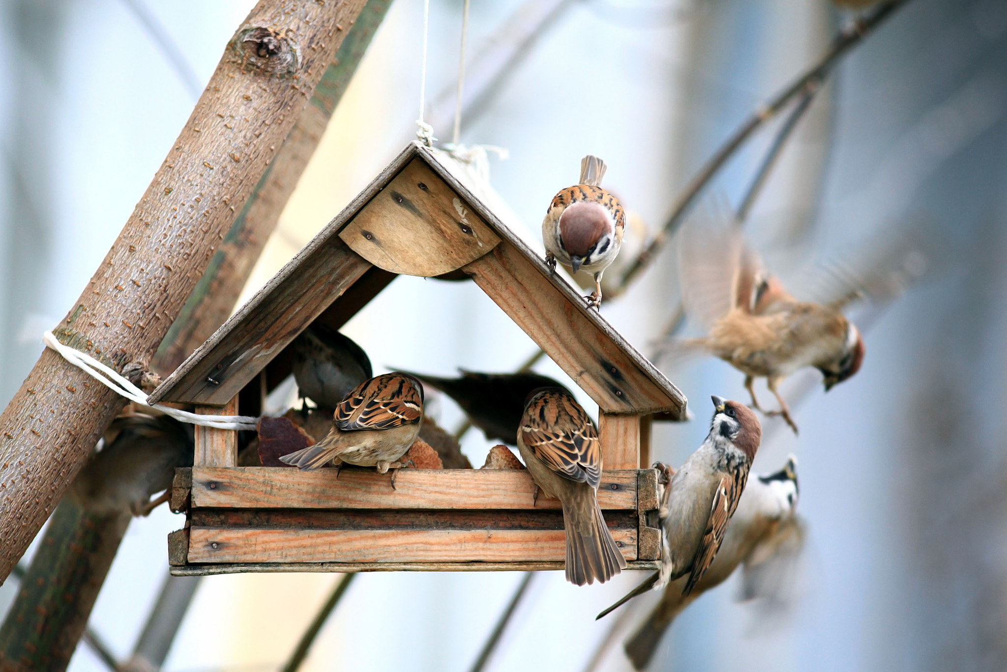 Photograph Sparrows - noisy apartment by Kichigin Sergey on 500px