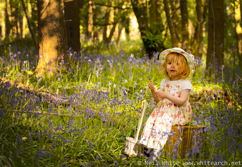 Photograph Among the Bluebells by Neil White on 500px