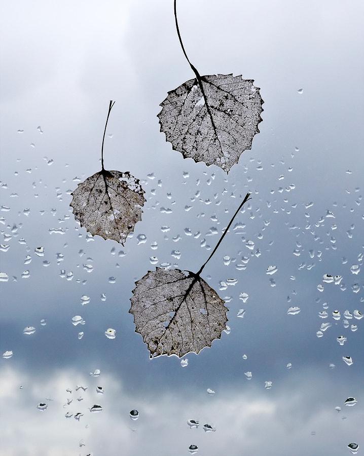 Fall --> falling