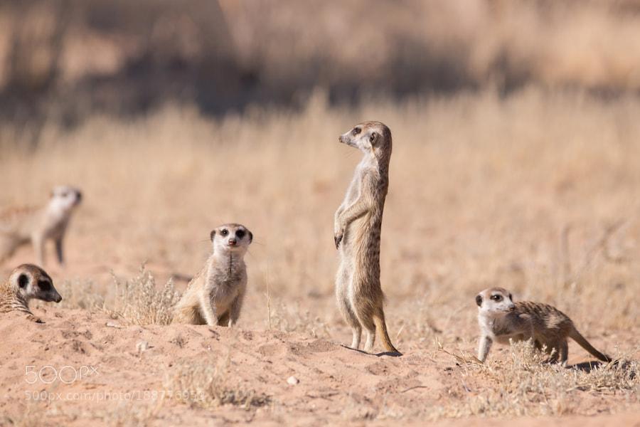 Guardians of Kalahari