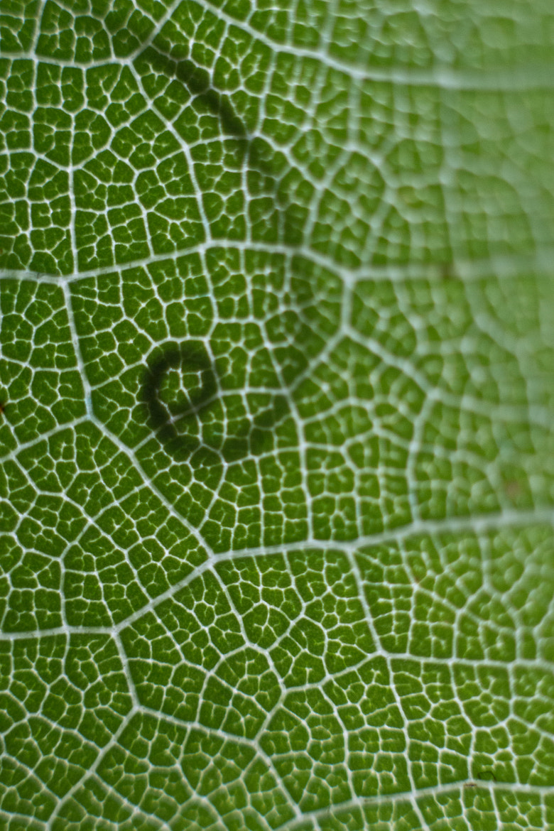 Photograph texture of leaf by Marianna Lembo on 500px