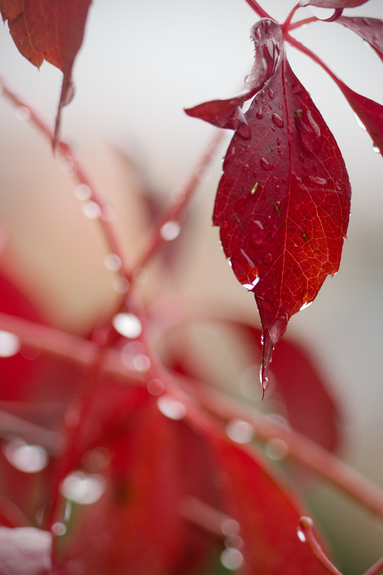 Photograph red leaves by Marianna Lembo on 500px