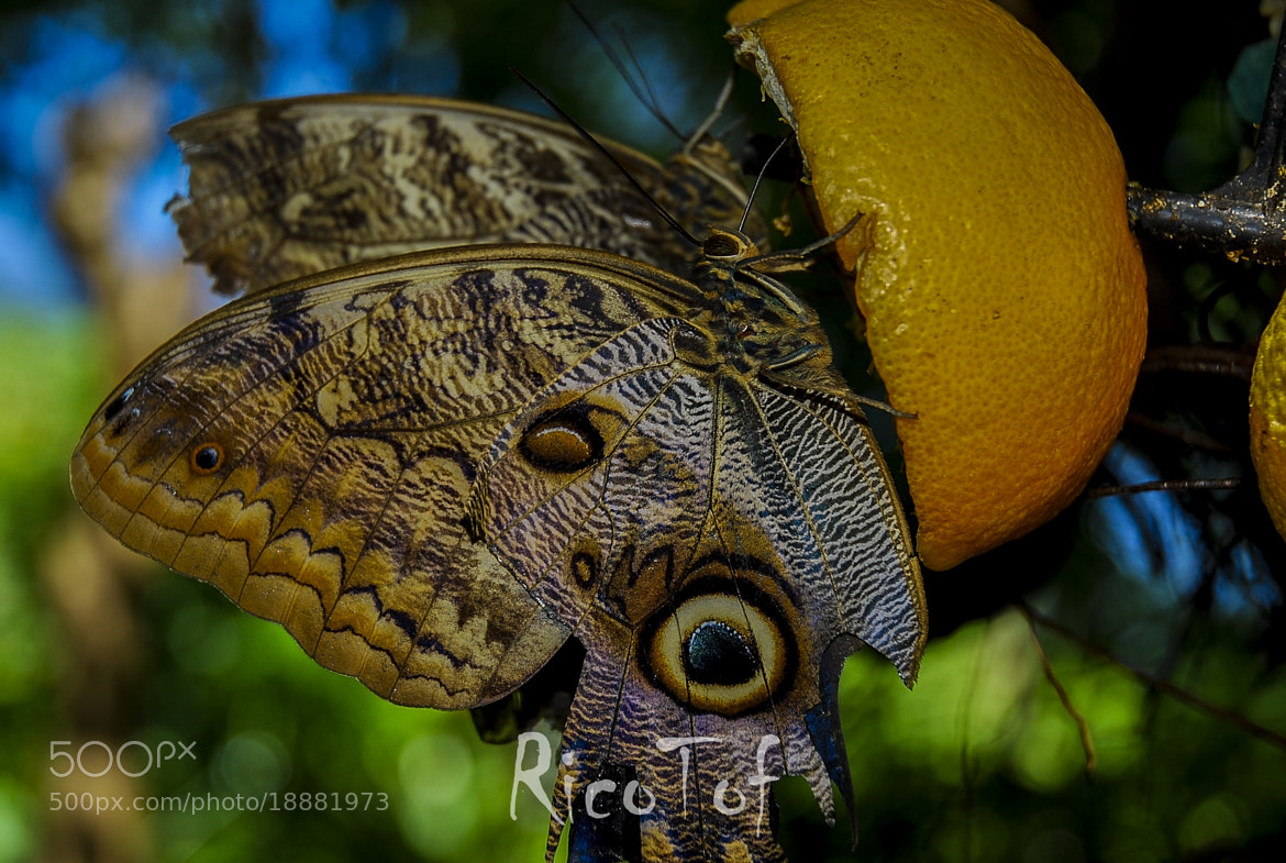 Photograph Butterfly by RicoPhotography  on 500px