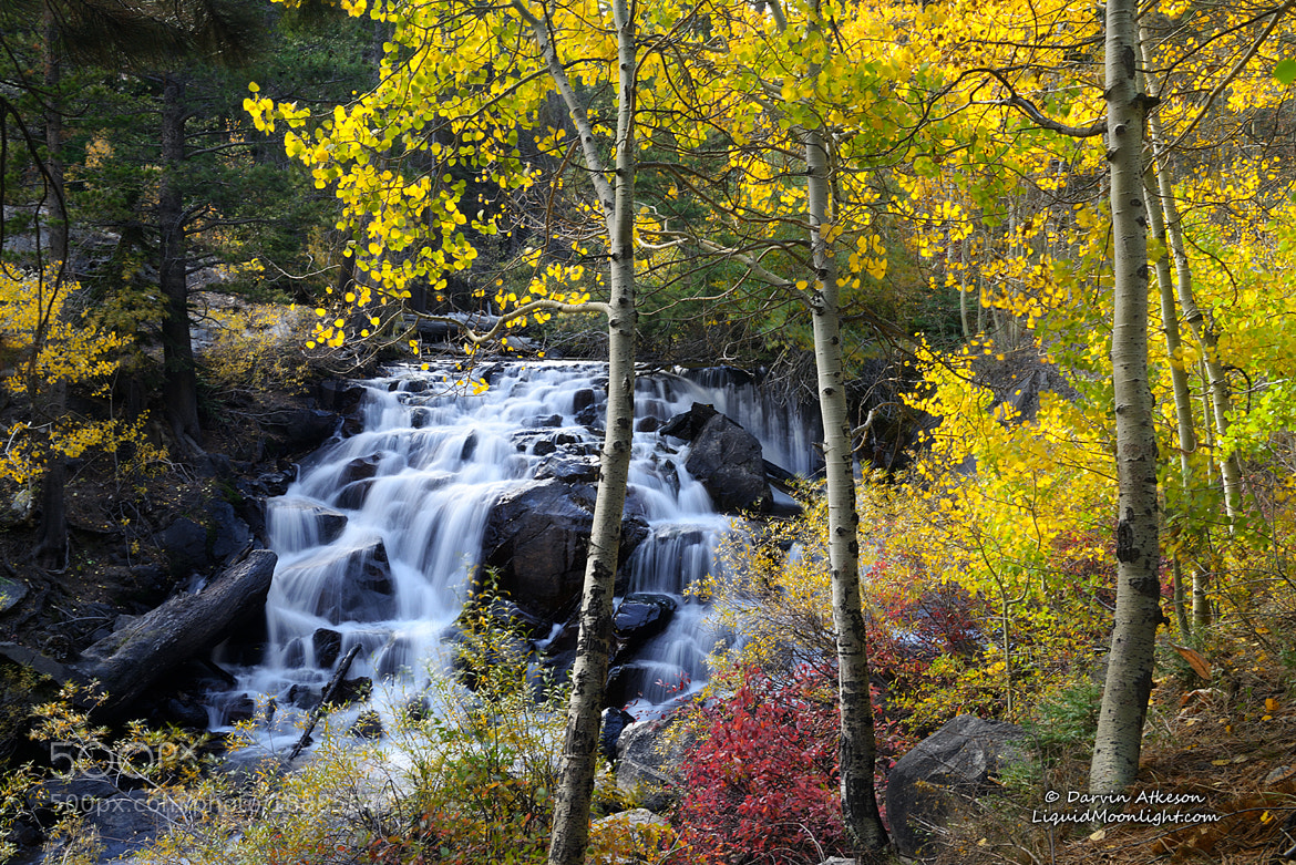 Photograph Autumn Falls - Lee Vining Creek  by Darvin Atkeson on 500px