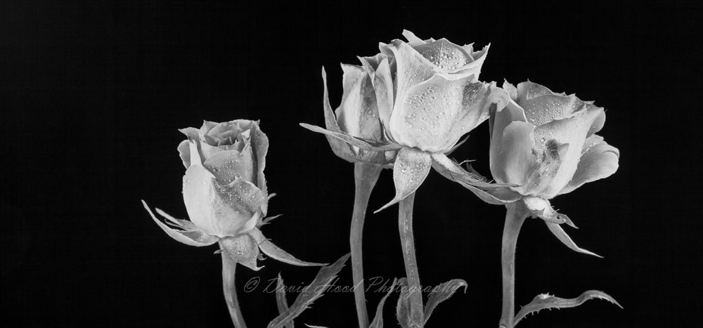 Photograph 20121123_Floral_01 by David Hood on 500px