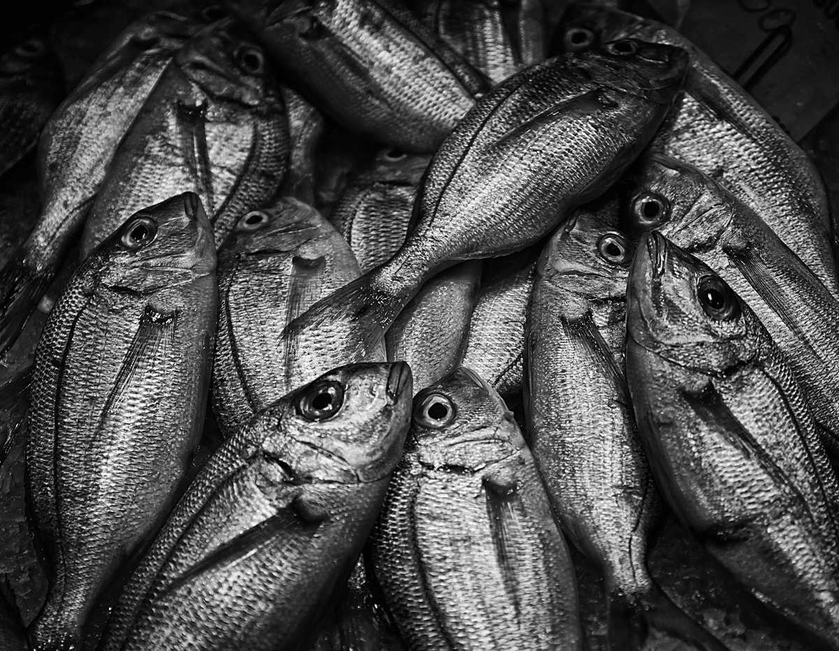 Photograph Peixos 2 by Iban Gonzalez on 500px