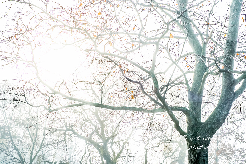 Photograph Foggy morning. by Ajit Wadekar on 500px