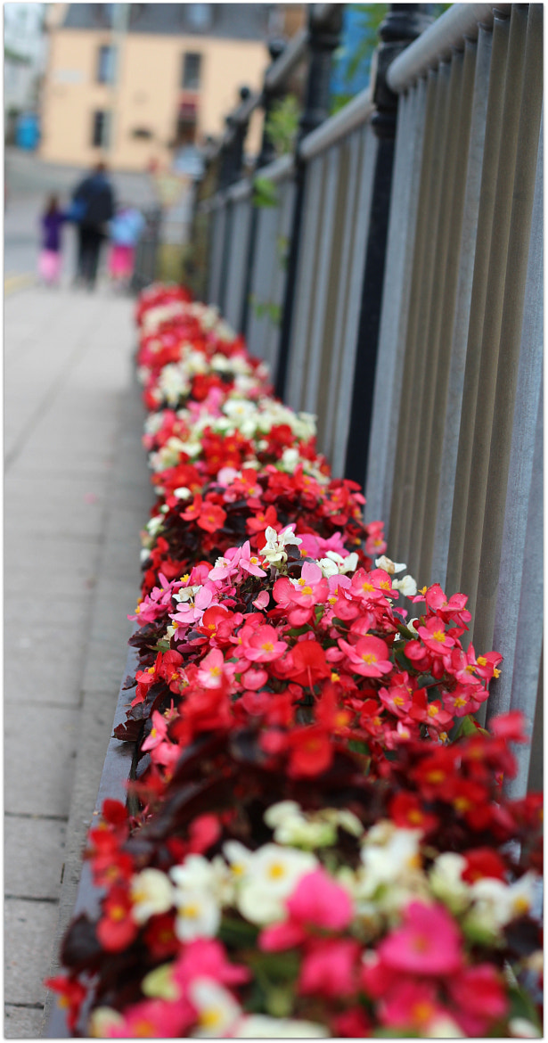 Photograph Flowers at Portree by Sandeep Malhotra on 500px